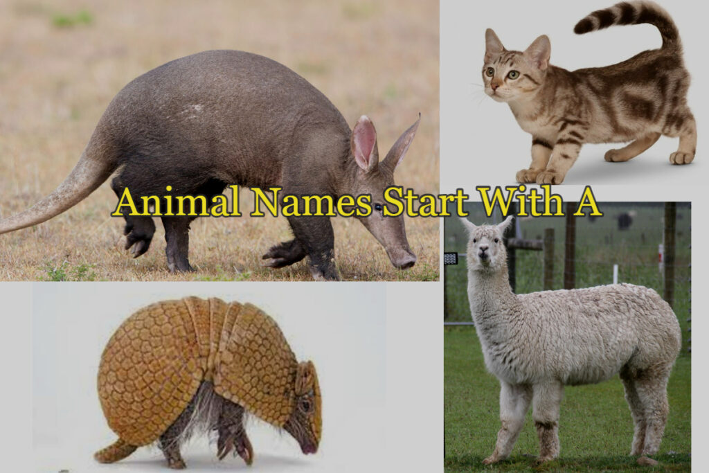 picture of animals whose name starting with A