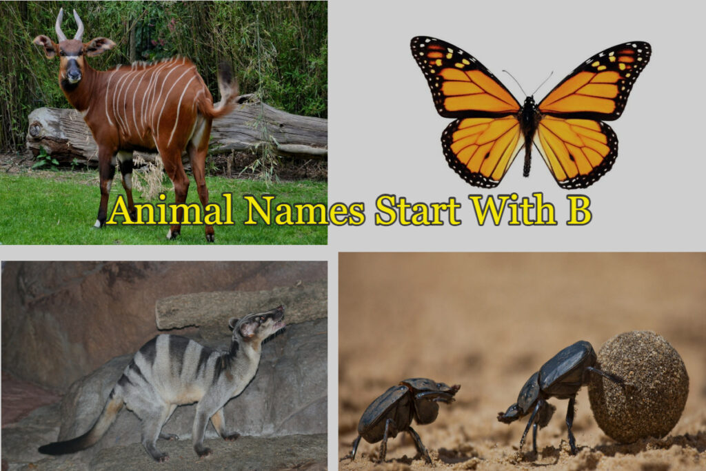 list of animal names starts with B letter