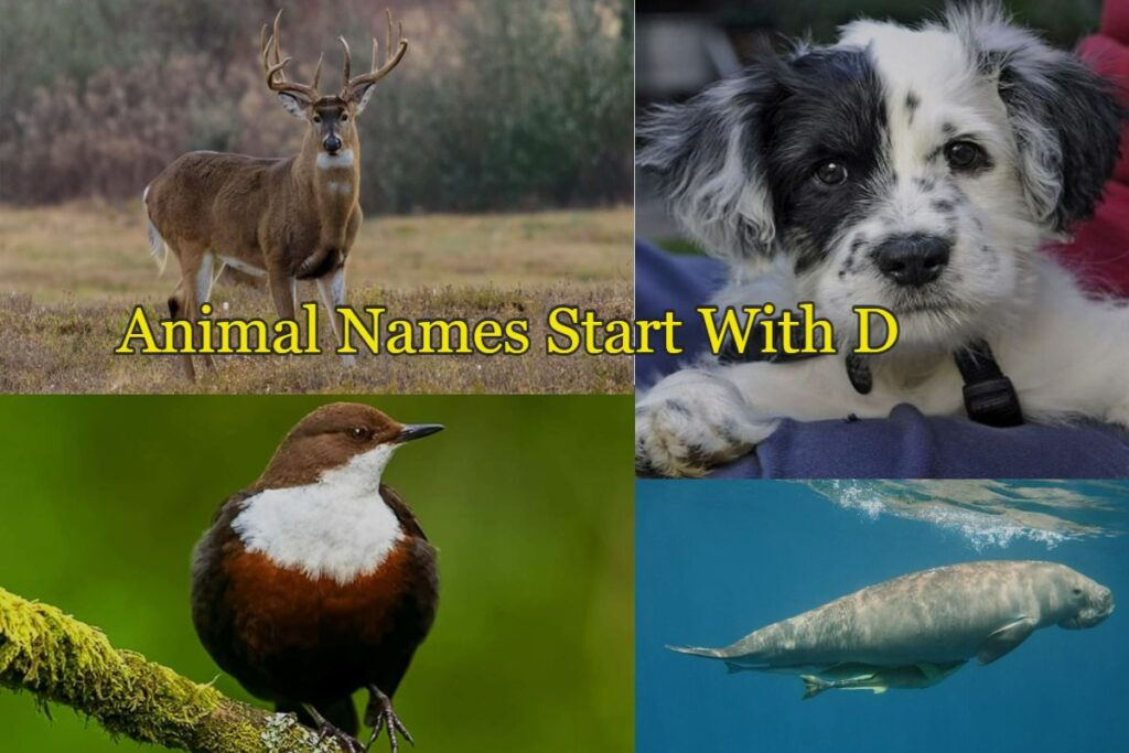 Animal-names-starts-with-D