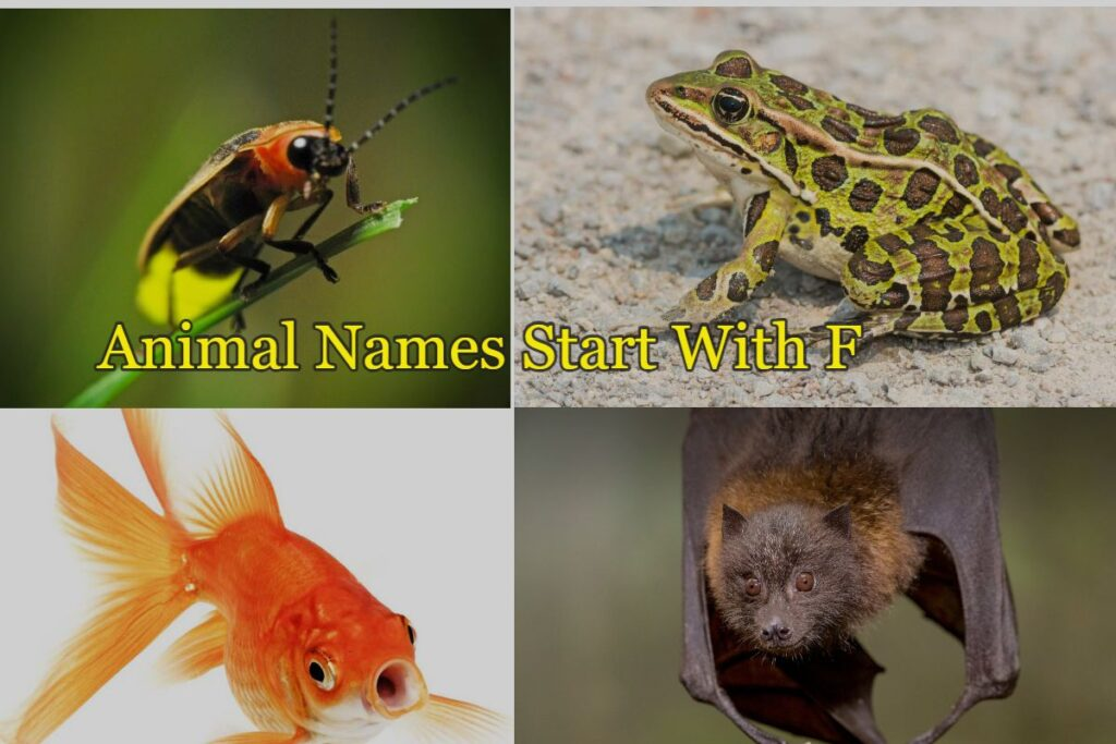 animals that start with the letter f
