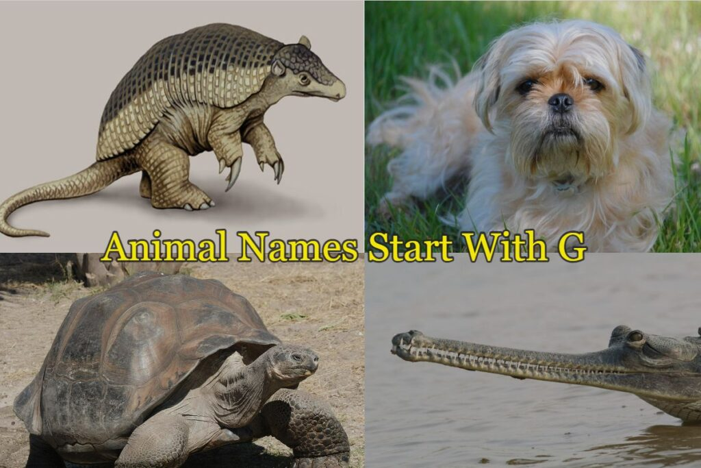 Animal names starts with G