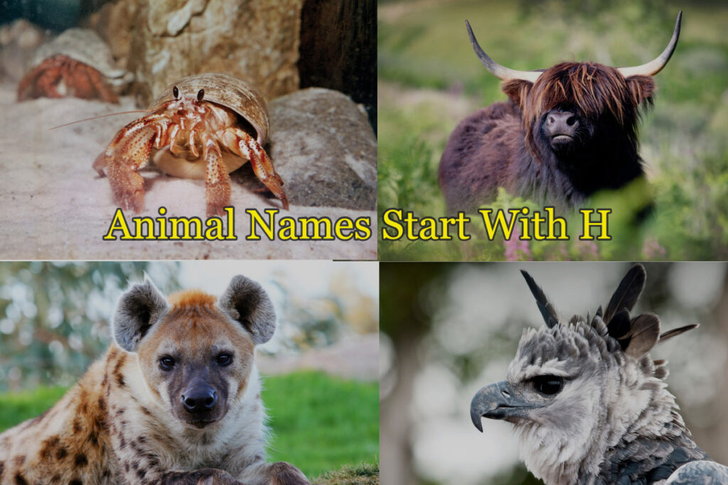 animals that start with the letter h