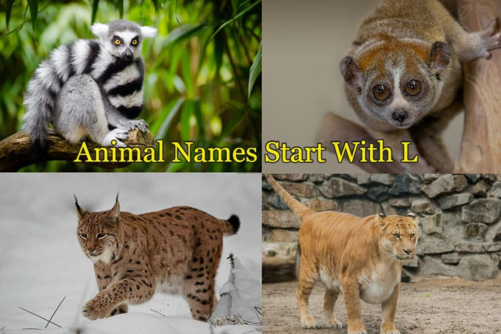 Animal-names-starts-with-L