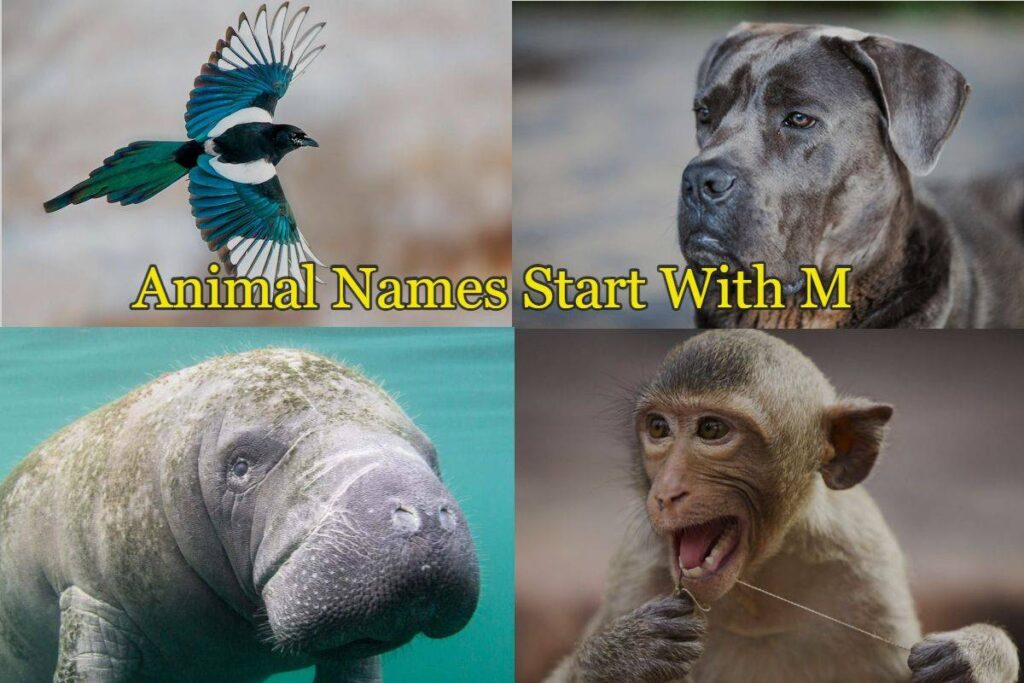 Animal-names-starts-with-M